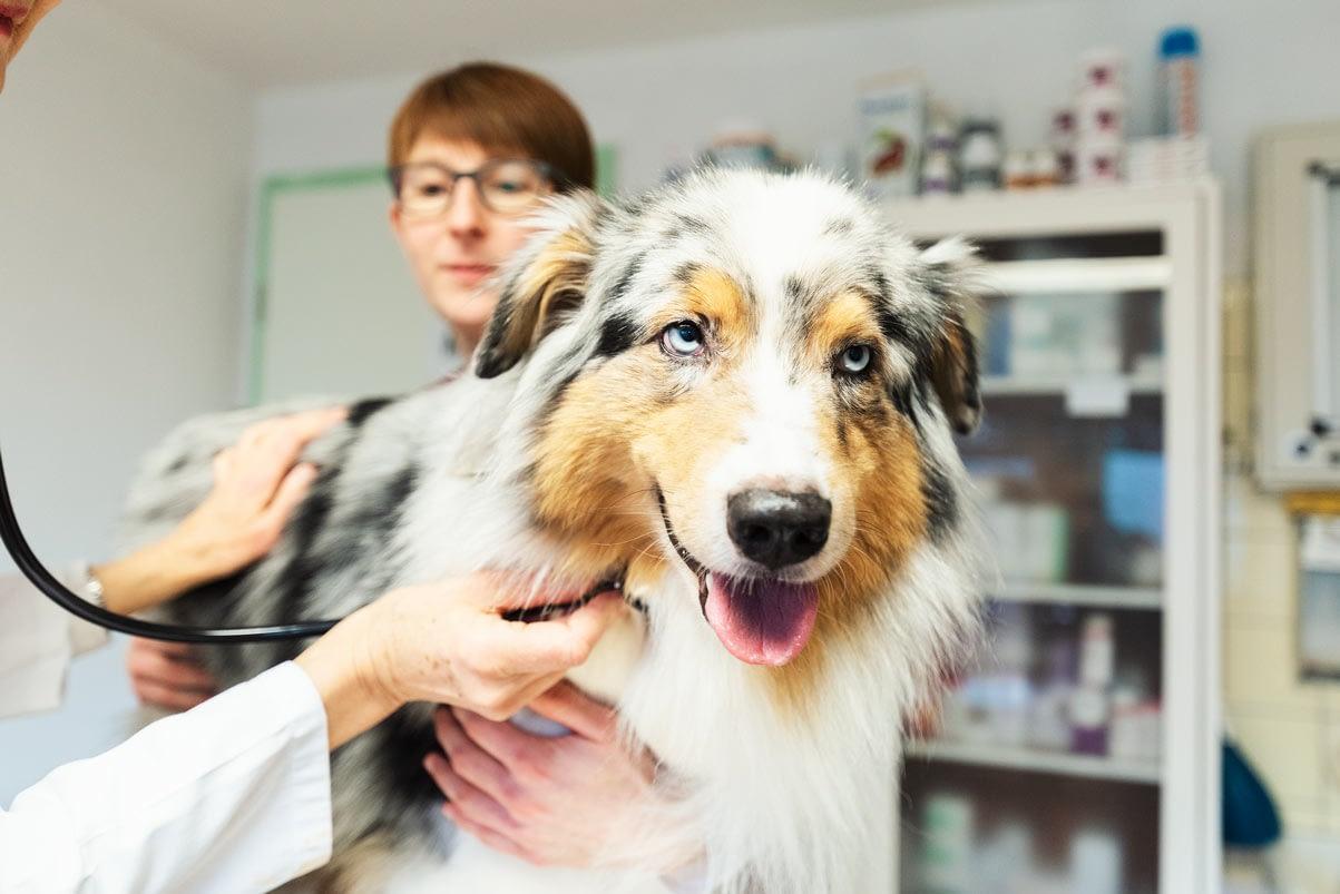 Tierarztpraxis Doveren - Domagk-Geks